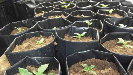 CULTIVATE URUGUAY GROW Cultivate Uruguay Grow