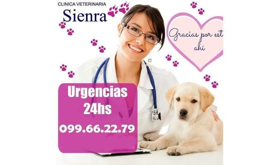 CLINICA VETERINARIA SIENRA